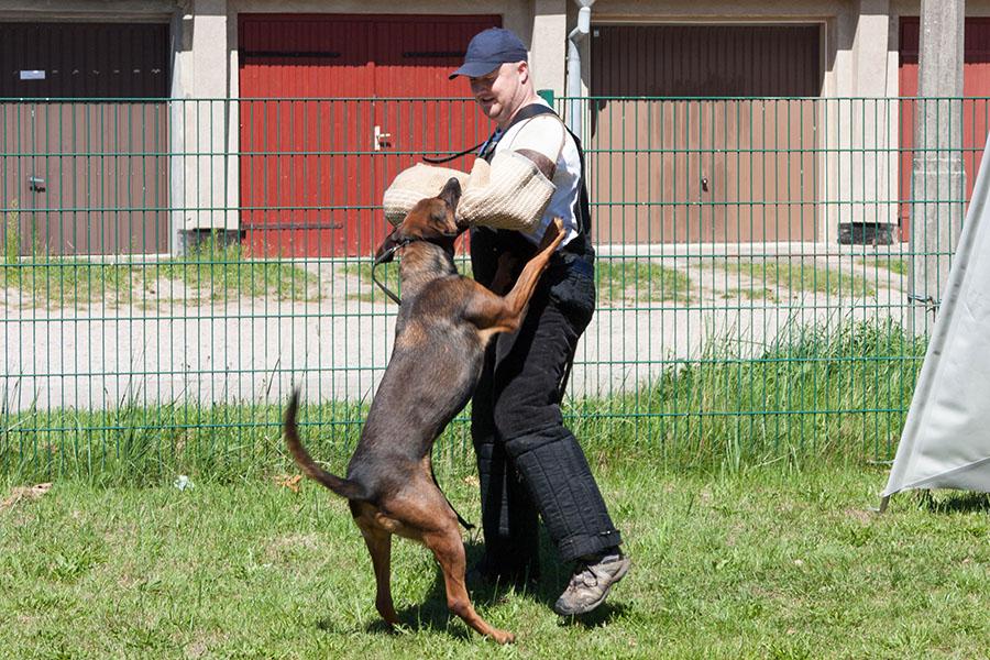 GHS-2016-Schutzhunde_160720_04-900x600
